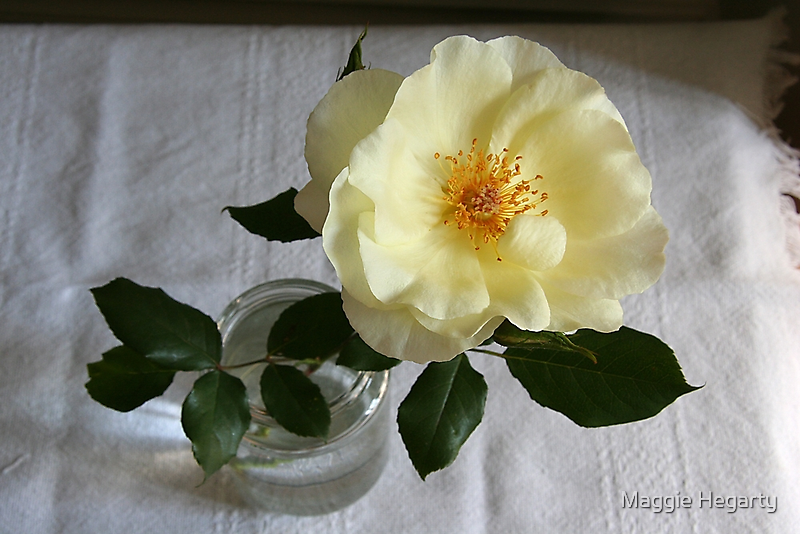 Cottage rose by Maggie Hegarty