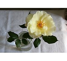 Cottage rose Photographic Print