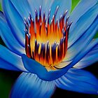 Exotic Waterlily / Lotus by Laura Bell