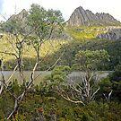 Tasmanian Beauty by Harry Oldmeadow
