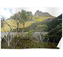 Tasmanian Beauty Poster