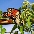 The First Monarch by WildestArt