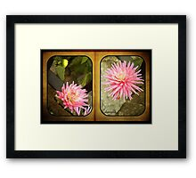 Pink Dahlias in an Old Worn Book Framed Print