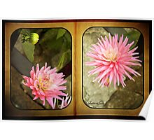 Pink Dahlias in an Old Worn Book Poster