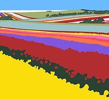 Tulip Fields, Table Cape by Richard Klekociuk