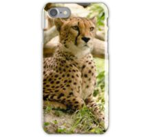 Alert Cheetah  iPhone Case/Skin