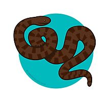 Brown Water Snake Photographic Print