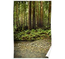 Muir Woods Sentinels Poster