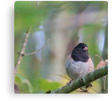 Little Bird in a Pastel Wonderland Canvas Print