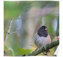 Little Bird in a Pastel Wonderland Poster