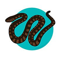 Southern Water Snake Photographic Print