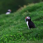 Puffin Fest by Claire Walsh