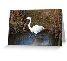 Just Right (Great Egret) Greeting Card
