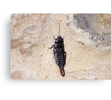 insect. Canvas Print