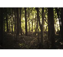 In the Shadows of the Sun Photographic Print