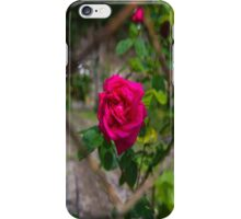 Rose and wire iPhone Case/Skin