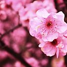 Pink Blossom by LouJay