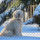 Don't Fence Me In! by Sandra Fortier