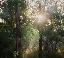 Mist in the Gums by Adam Le Good