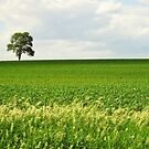 Out Standing in Its Field by lorilee