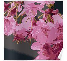 Beautiful Pink Sakura Cherry Blossoms Illustration Poster