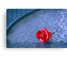 A Chilli Rose  Canvas Print