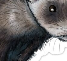 Curious Ferret Sticker