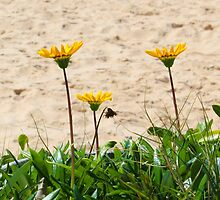 Beach Flowers by PetaStreet