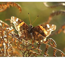 Leaf or butterfly ? Photographic Print