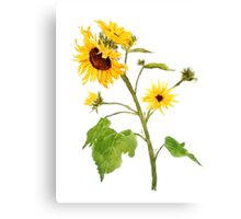 sunflower watercolor painting  Canvas Print