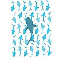 Shark Bait Ooo Ha Ha Photographic Print