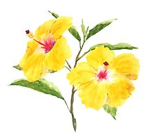 yellow hibiscus watercolor painting  Photographic Print