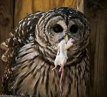 Barred Owl with Dinner by InRC