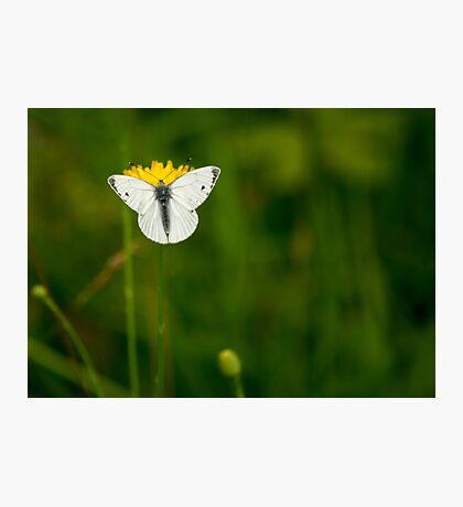 Small White Photographic Print