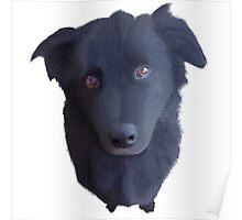 Portrait of my Dog (Original) Poster