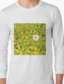 Daisy Flower Reaching For The Sun Long Sleeve T-Shirt