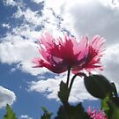 Poppy Sky by LouJay