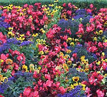 Colourfull display at butchart gardens by jozi1