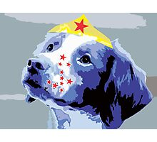 Wunderhund - Brittany Spaniel #2 Photographic Print