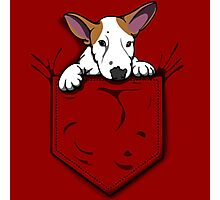 English Bull Terrier Pocket Puppy Photographic Print