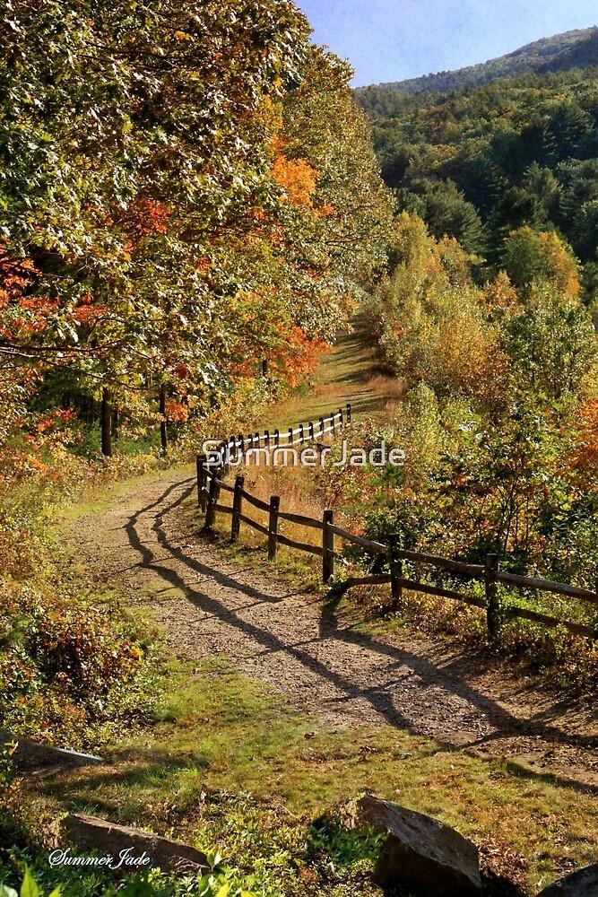 Broken Fence Rail on Quabbin Trail by SummerJade