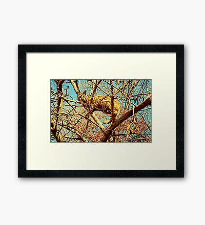 """HEAD FOR THE HILLS, I mean branches""... prints and products Framed Print"