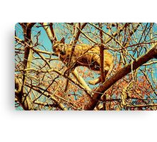 """HEAD FOR THE HILLS, I mean branches""... prints and products Canvas Print"