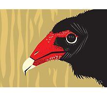 Crikey the Turkey Vulture Photographic Print