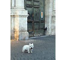 Westie in Rome Photographic Print