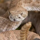 Rattlesnake by William C. Gladish