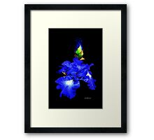 Iris of my eye! Framed Print