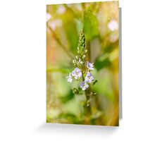 Veronica, Water Speedwell Flower Greeting Card