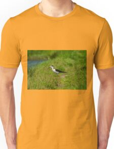 Black-winged Stilt Unisex T-Shirt