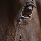 Horse Tears by Hayely Queen